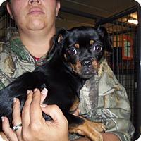 Adopt A Pet :: GINGER - Medford, WI