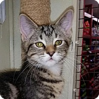 Adopt A Pet :: Huckleberry - Parker Ford, PA
