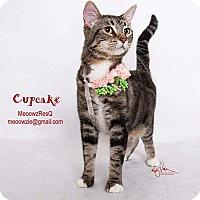 Adopt A Pet :: Cupcake - Orange, CA