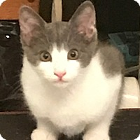 Adopt A Pet :: Oliver - Richfield, OH
