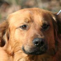 Adopt A Pet :: Levi - Hopkins, SC