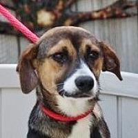 Adopt A Pet :: Melvin - Yardley, PA