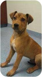 Hound (Unknown Type) Mix Dog for adoption in Gainesville, Florida - Marshall