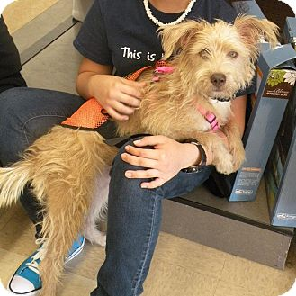 Terrier (Unknown Type, Medium) Mix Dog for adoption in Homestead, Florida - Tippy