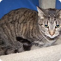 Adopt A Pet :: K-Isabella2-Stormy - Colorado Springs, CO
