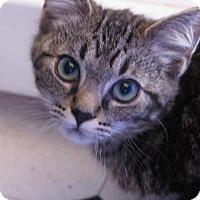 Adopt A Pet :: Frankie - Las Cruces, NM