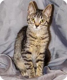 Domestic Shorthair Cat for adoption in Walworth, New York - Delilah