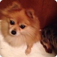 Adopt A Pet :: Liza - Butler, OH