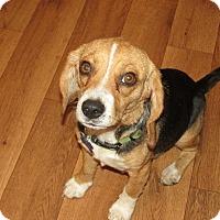 Adopt A Pet :: Puppet - Franklin, VA