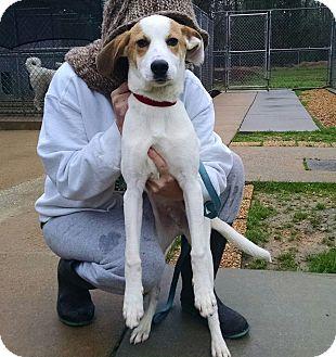 Hound (Unknown Type) Mix Dog for adoption in Richmond, Virginia - Wiley