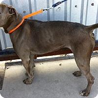 Adopt A Pet :: Coffee - Phoenix, AZ
