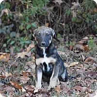 Adopt A Pet :: Razzy - South Dennis, MA