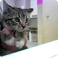 Adopt A Pet :: JR - Conroe, TX