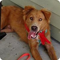 Adopt A Pet :: Chance - Murrells Inlet, SC