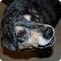 Adopt A Pet :: Dog - Salem, WV