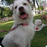Adopt A Pet :: Layca - San Diego, CA