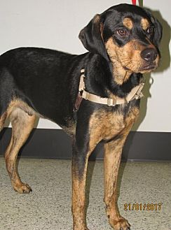 Hound (Unknown Type) Mix Dog for adoption in Conroe, Texas - Dexter