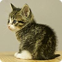 Adopt A Pet :: Conrad - Great Falls, MT