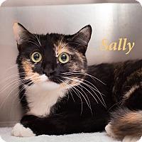 Adopt A Pet :: Sally - El Cajon, CA