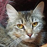 Adopt A Pet :: Grace - Troy, MI