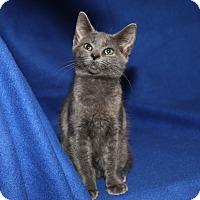 Adopt A Pet :: Olivia - Marietta, OH