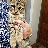 Adopt A Pet :: Cotija - Fairbury, NE