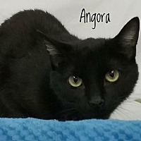 Adopt A Pet :: Angora - Kendallville, IN