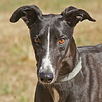 Adopt A Pet :: Ontario (Teri) - Portland, OR