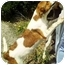 Photo 2 - Coonhound (Unknown Type) Mix Dog for adoption in Gahanna, Ohio - Lucky