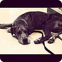 Adopt A Pet :: Merlin - Grand Rapids, MI