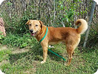 Hound (Unknown Type)/Terrier (Unknown Type, Medium) Mix Dog for adoption in Moberly, Missouri - Scrappy