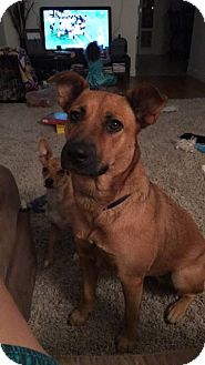 German Shepherd Dog Mix Dog for adoption in Phoenix, Arizona - Kona