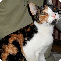 Adopt A Pet :: Gracey - Chattanooga, TN