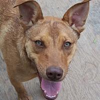 Adopt A Pet :: Tater - Conway, AR