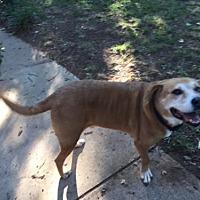 Adopt A Pet :: Rusty - Euless, TX