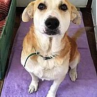 Adopt A Pet :: Mattias - Cerritos, CA