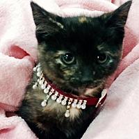 Adopt A Pet :: April - Greensburg, PA