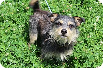 Terrier (Unknown Type, Small) Mix Dog for adoption in Waldorf, Maryland - Mosby