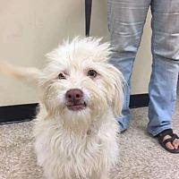 Adopt A Pet :: Ryder - Palmdale, CA