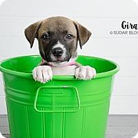 Adopt A Pet :: Girard - Denver, CO