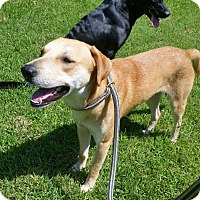 Adopt A Pet :: Rocky - Charleston, SC