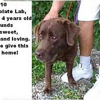 Adopt A Pet :: # 399-10 @ Animal Shelter - Zanesville, OH