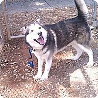 Adopt A Pet :: Jonesy - E Windsor, CT
