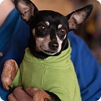 Adopt A Pet :: Peanut - Syracuse, NY