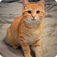 Adopt A Pet :: Tonka - McDonough, GA