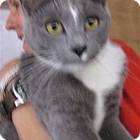 Adopt A Pet :: Bandit - Reeds Spring, MO