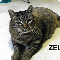 Adopt A Pet :: Zelda - Medway, MA