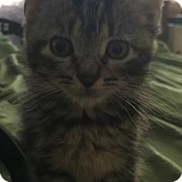 Adopt A Pet :: Barbaro - Trevose, PA