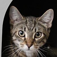 Adopt A Pet :: Primrose - Sarasota, FL