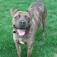 Adopt A Pet :: Reece - Sharon Center, OH